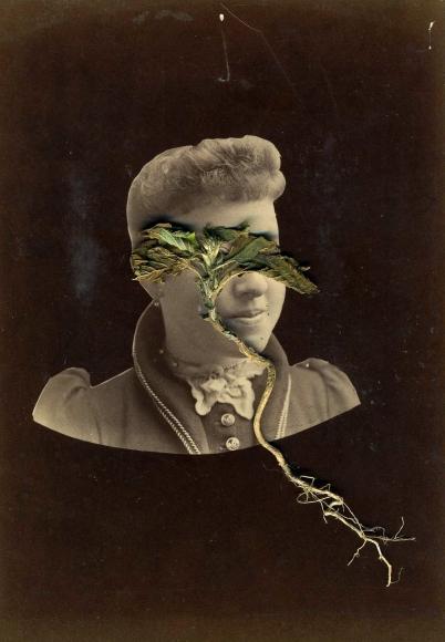 Barbara Levine, <em>Root Lady</em>, 2014