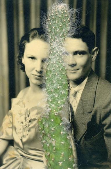 Barbara Levine, <em>Cactus Between Us</em>, 2014